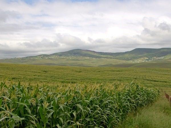 KwaZulu-Natal, plaastoneel, plaas,