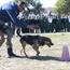 Honde snuffel dwelms oral uit