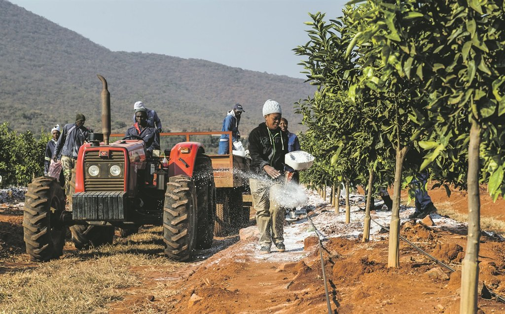 Pieter Vorster from Mahela and Daniel Kgoedi, chairperson of the Rietfontein Homeless People Trust. They have become partners in a citrus farm, which already is showing great promise. They hope to prove that land reform can work. Here community members tend to the land Picture: Deon Raath