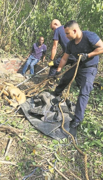 Msunduzi firefighters helped the Pietermaritzburg SPCA rescue a dog from a well on Sunday. The whole operation lasted two hours.