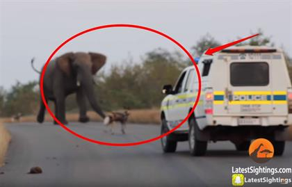 Shocking must-see videos of SA wildlife - from hippos