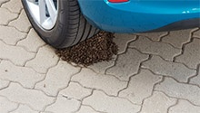 WATCH: Business is buzzing at this Ford dealership as bees create hive on tyre