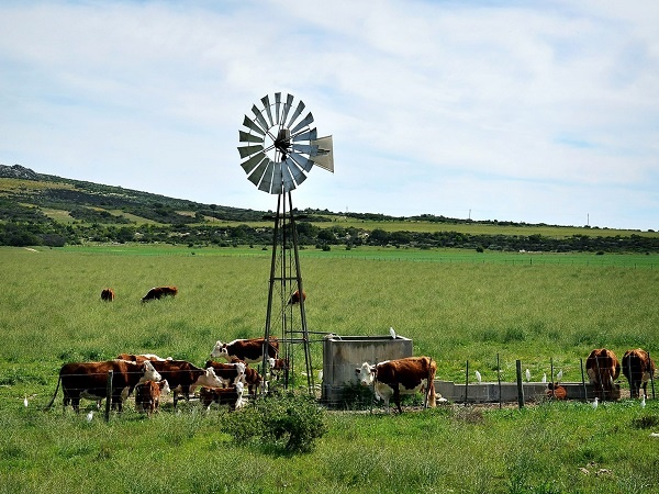 beeste, veld, landskap, windpomp,