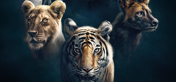 BBC Earth's Dynasties.