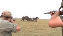 WATCH: 'Hit it between the eyes' – elephants charge at hunters after one shot down