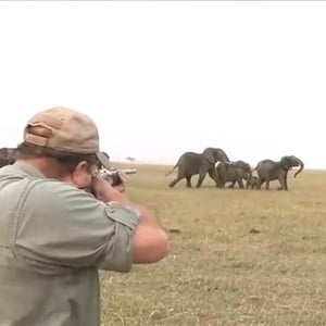 WATCH: 'Hit it between the eyes' - elephants charge at hunters after one shot down