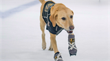 Watch: A dog owner built custom ice skates for her pup and taught him how to skate