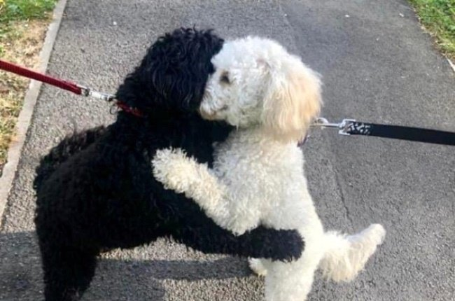 The two dogs are actually siblings that were separated as puppies and have been apart for 10 months. (Photo: @libpincher /Twittter)