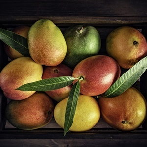 Tropical fruits: Wooden crate with assorted mangos