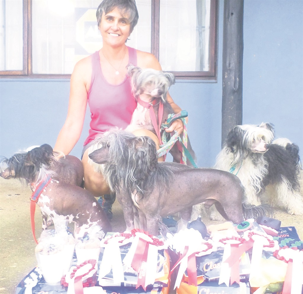 PHOTOS: reporterMichelle Howard and her five Chinese crested dogs won a heap of prizes.