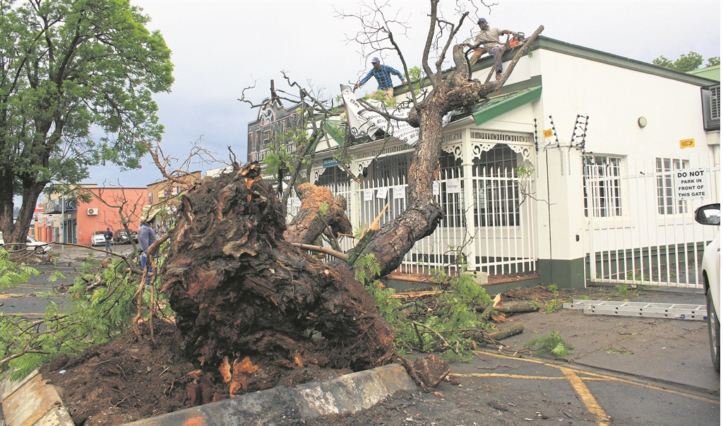 An uprooted tree that ploughed into a business premises on Greyling Street.