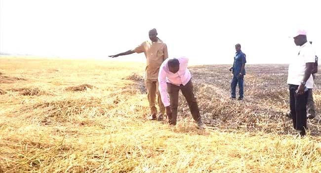 the burnt rice farm
