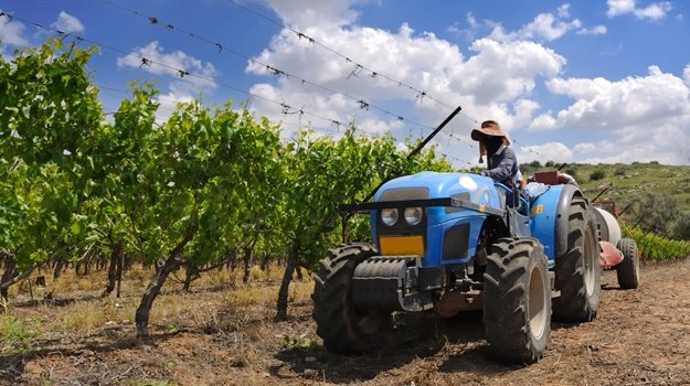 tractor working at the vineyard
