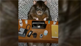 Watch: This rat-loving woman dresses up her pets for Instagram