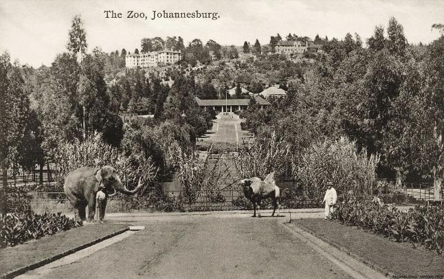 In die vorige eeu kon 'n mens in die Johannesburg-dieretuin op 'n olifant of kameel  se rug ry. Dié ritte is sedertdien afgeskaf, maar deesdae kan jy 'n toer doen wat jou wys hoe dinge agter die skerms werk of selfs in die dieretuin kamp vir 'n aand.