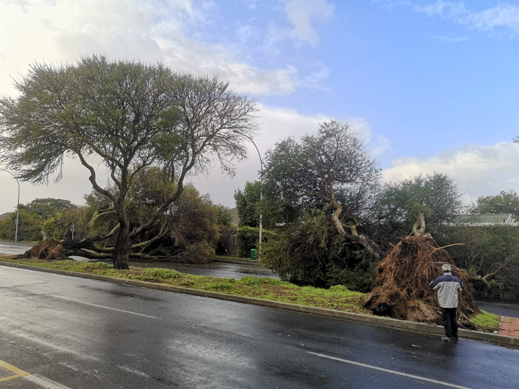 Trees uprooted in Bellville