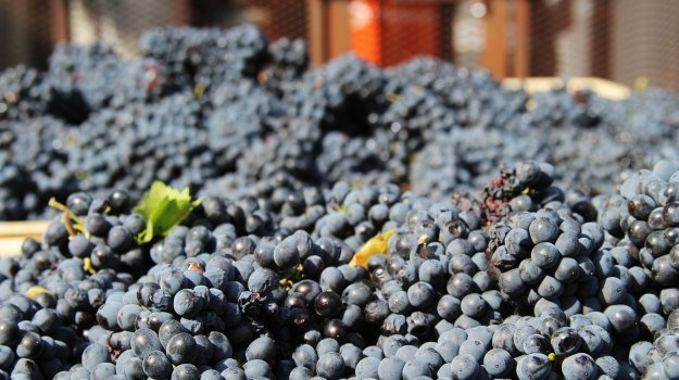 SA wine prices set to fall as bulk producers race against time