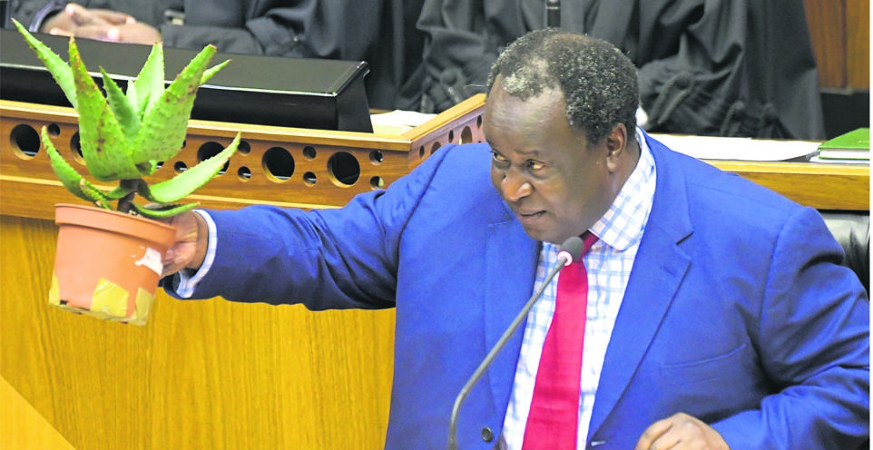 News24.com | Mpumelelo Mkhabela: There's hope for Mboweni's struggling aloe if all ministers show up