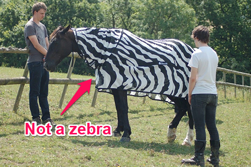 How a zebra's stripes make flies buzz off