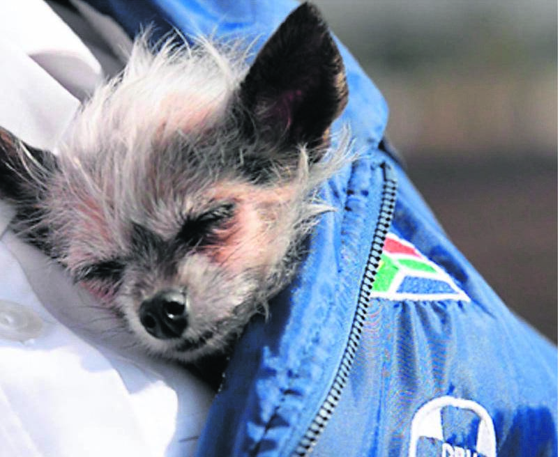 Uitenhage SPCA staff members have selflessly offered to leave the comfort of their own homes to move into the SPCA premises for the duration of the lockdown period to brave it for the sake of the animals at the kennels.  Photo: NETWERK24