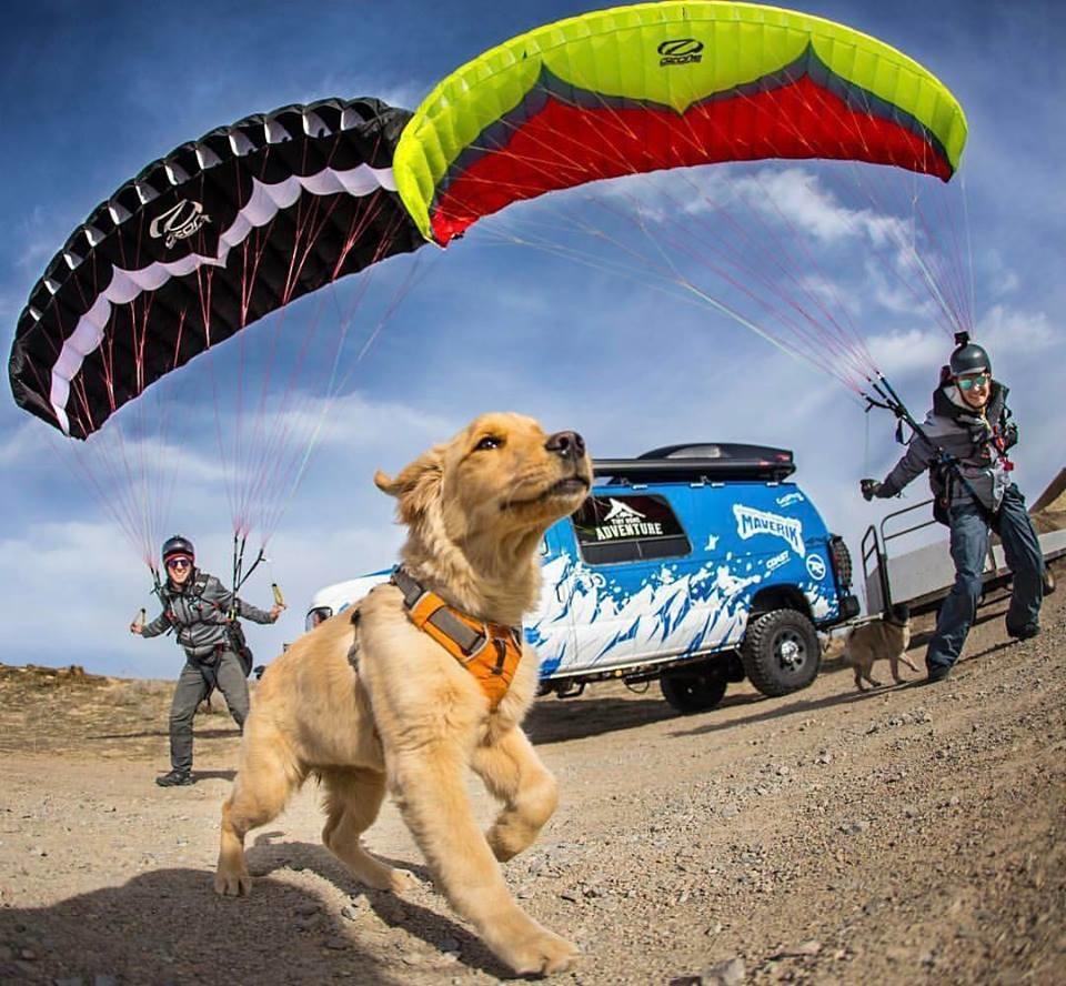 kicker,hond,avontuur