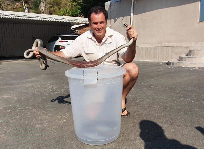 Snake catcher Nick Evans was called to the rescue
