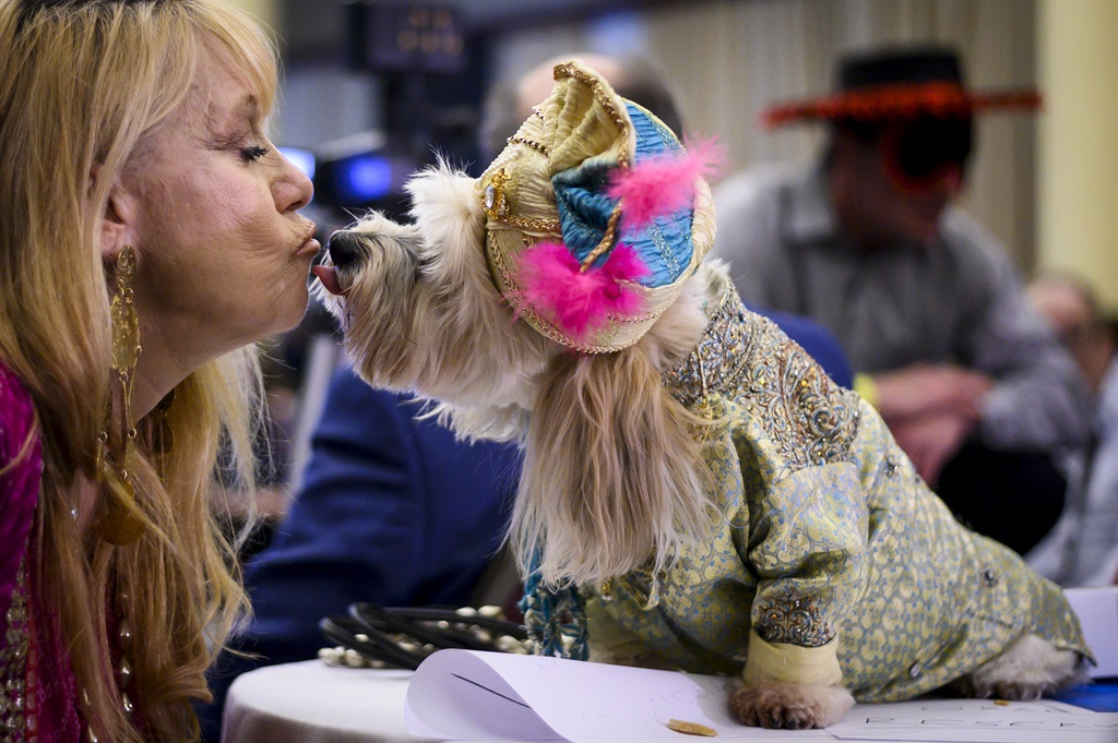 An owner kisses her dog, dressed up for a show, du