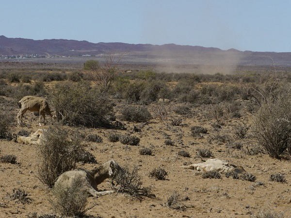 The Devastation of Drought