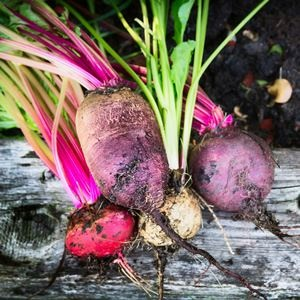 is beetroot good for you