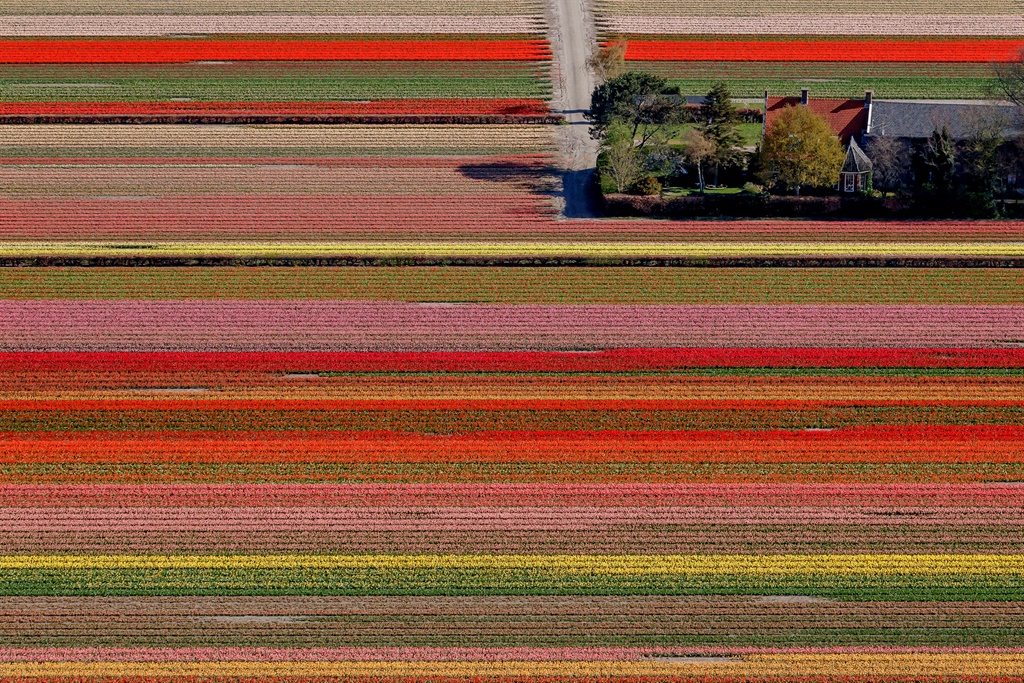 LISSE, NETHERLANDS - APRIL 10: Tulips, Hyacint and
