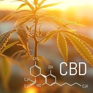 cannabidiol CBD oil stress management