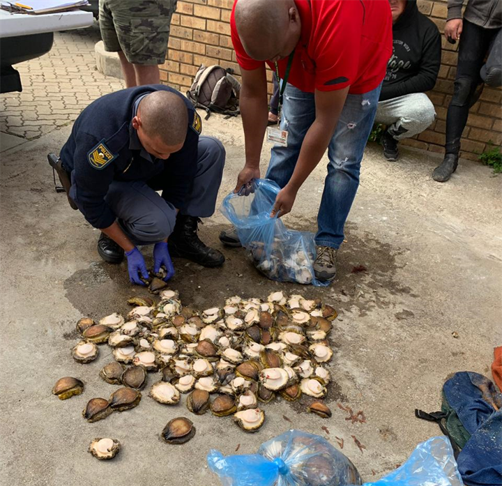 4 suspected abalone poachers arrested after R1m bust