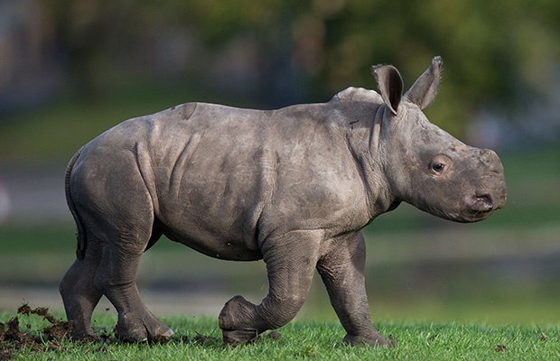 Channel24.co.za | From a baby rhino being born to superheroes kicking ass - Here's what you can watch on TV tonight