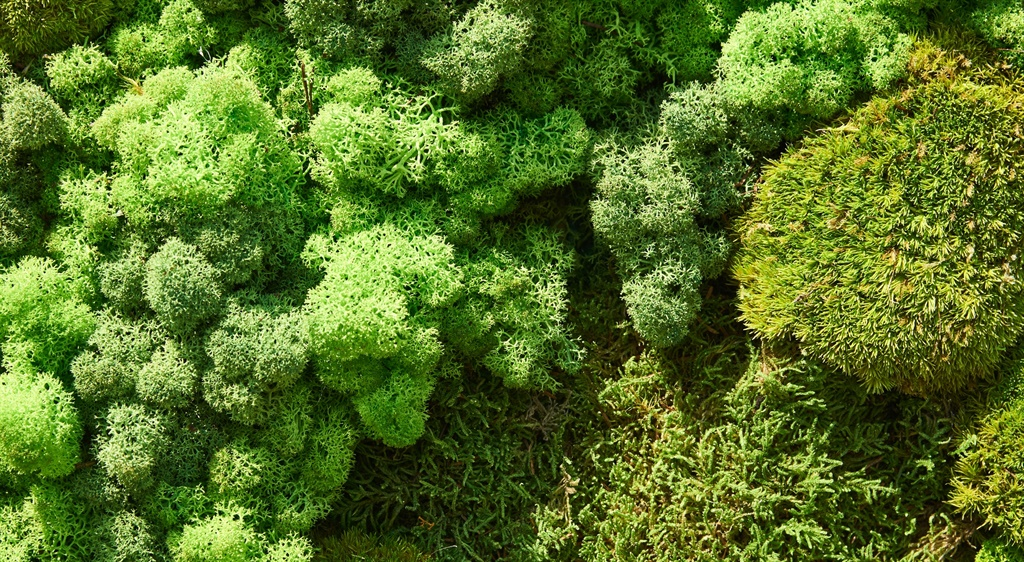 Composition of various types of moss. Background,