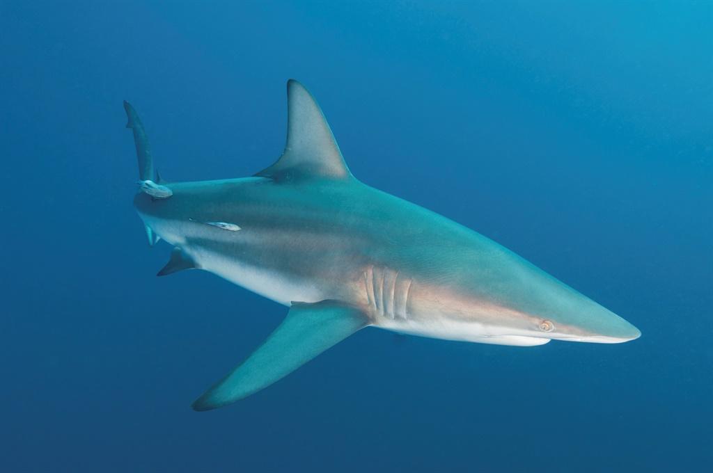 see,haai