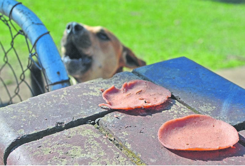 Slices of polony that were allegedly used by robbers to lure the dogs.