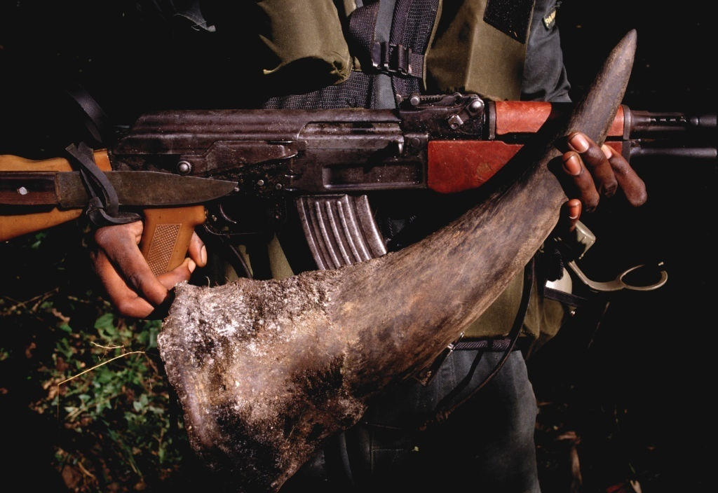 File photo: A rhino horn confiscated from poachers by National Park Rangers at Mana Pools in Zimbabwe.