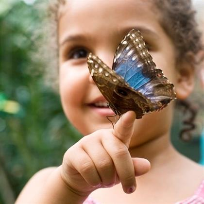 Child Holding Butterfly Speckled Wood