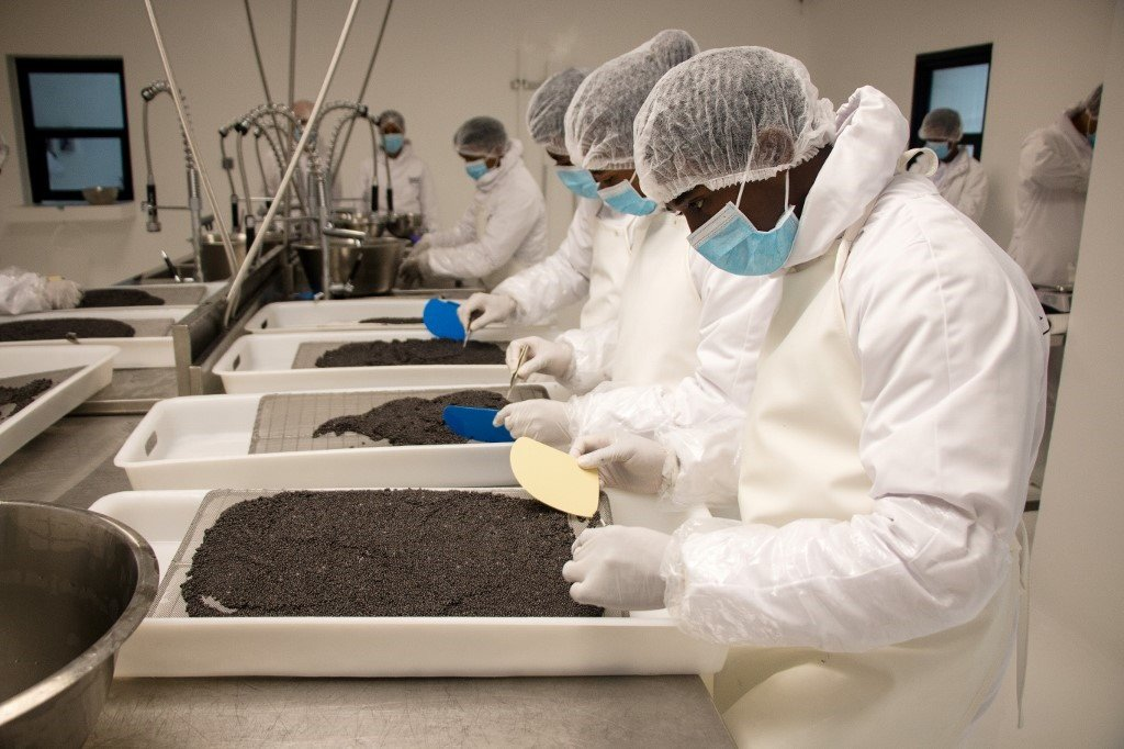 workers in a caviar factory