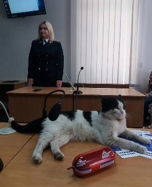 Cat in court. (Photo: cen, magazinefeatures.co.za)
