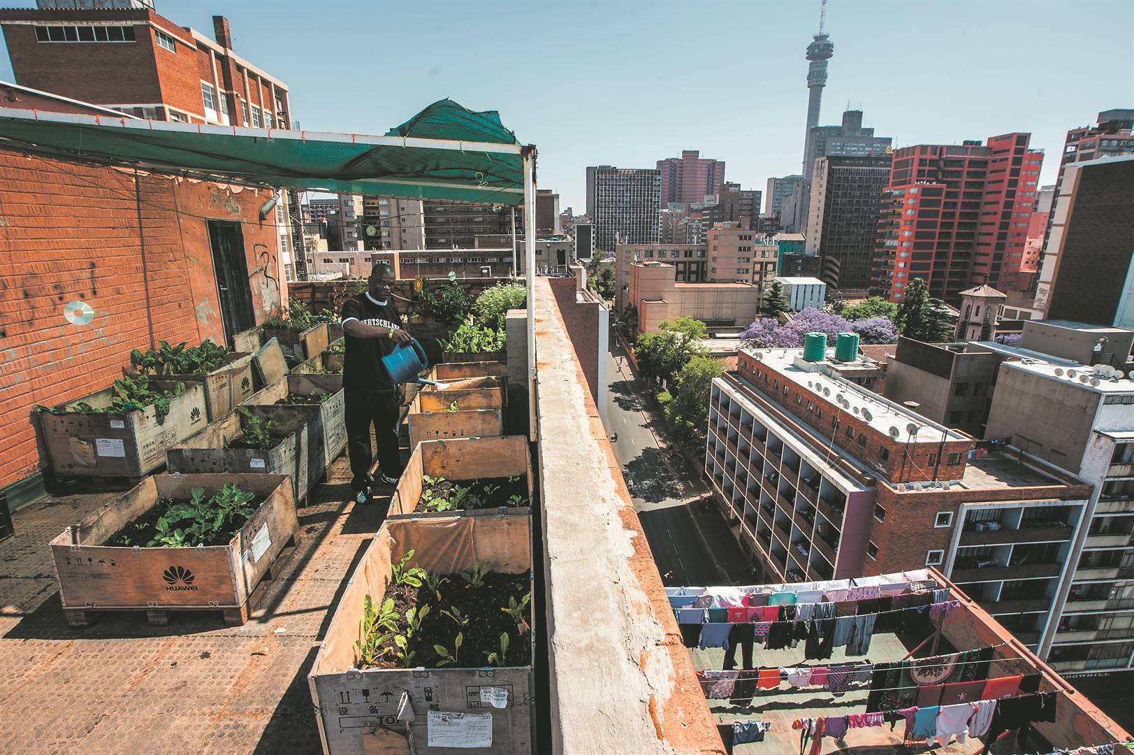A vegetable garden on a rooftop in Johannesburg