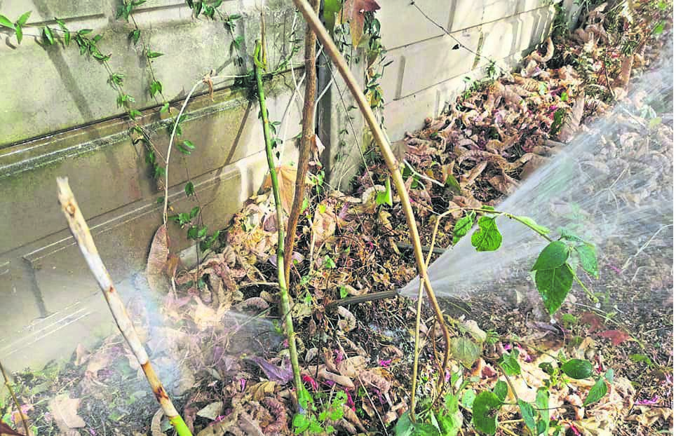 Water blasts out of a pipe after a water metre was stolen.PHOTO: supplied