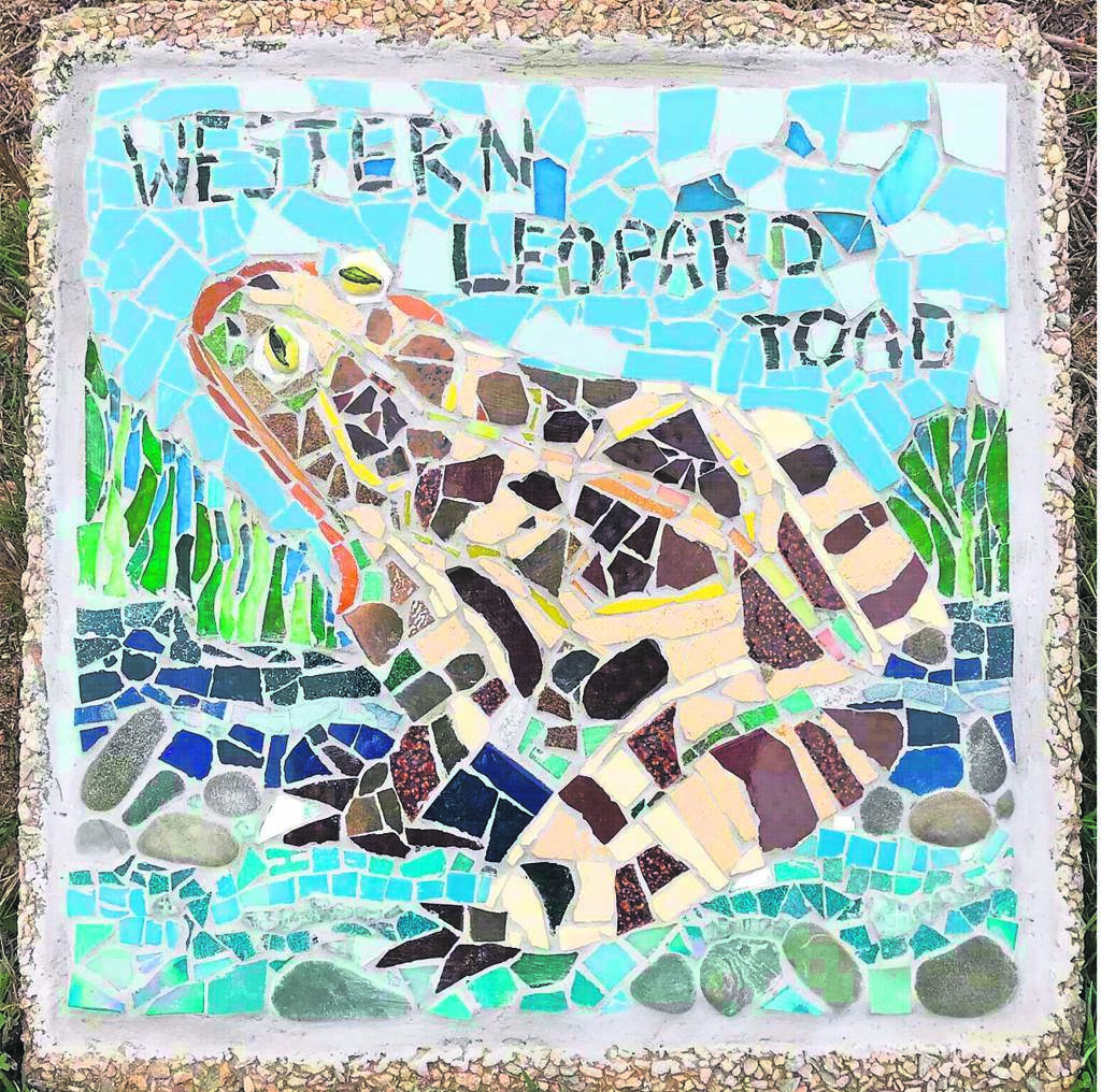 The Western Leopard Toad inhabits the Silvermine wetlands and has been immortalised in a mosaic.
