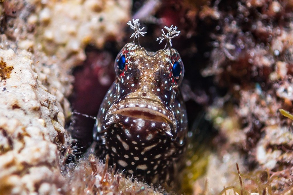 Dive into Lembeh for the weird and wonderful sea l