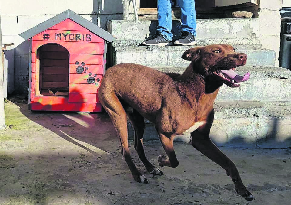 1 Kennel at a Time provides the essentials for dogs and other animals in need in Ocean View.