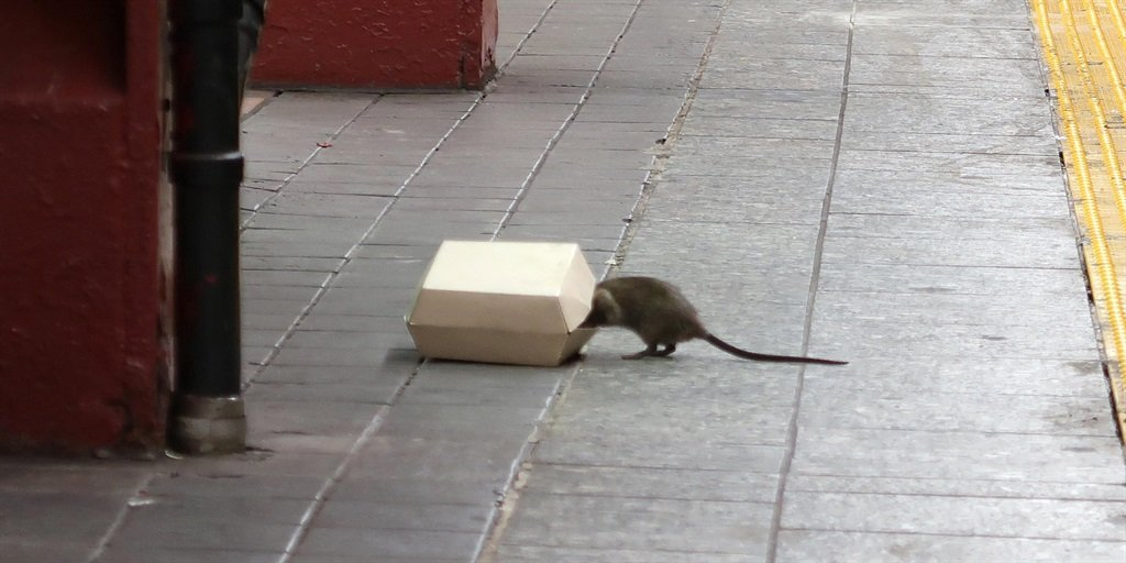 Rodents are a quality of life issue.