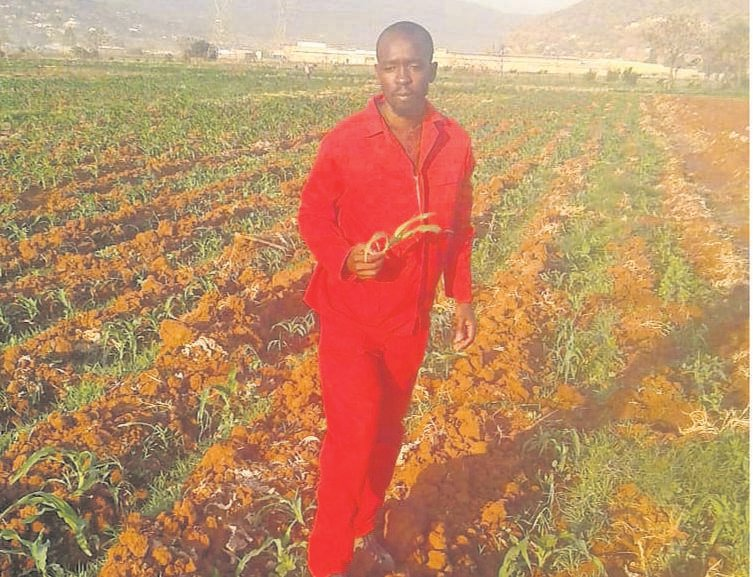Emerging farmer Sizwe Ndlovu inspects his crops in his garden. PHOTO: andile sithole
