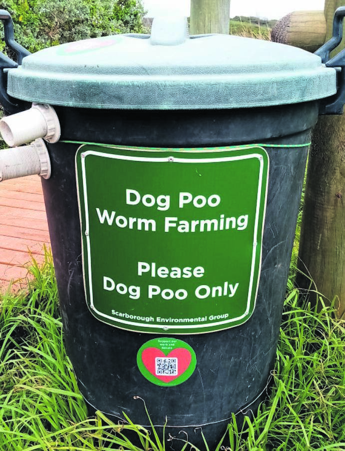 Dog poop worm farming serves to keep the environment clean and provide nutrient-rich compost to grow green gardens.