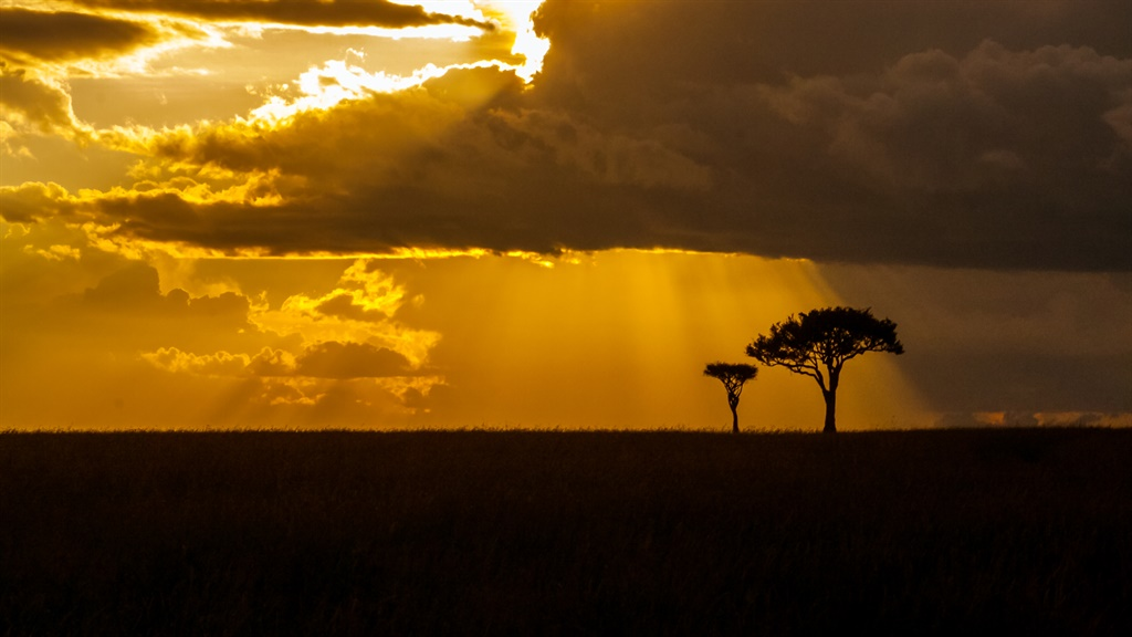 Acacia at golden hour in the african savannah