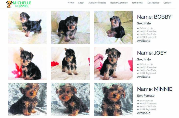 A screenshot of the Yorkshire Terrier puppies advertised on the Michelle Puppies website.
